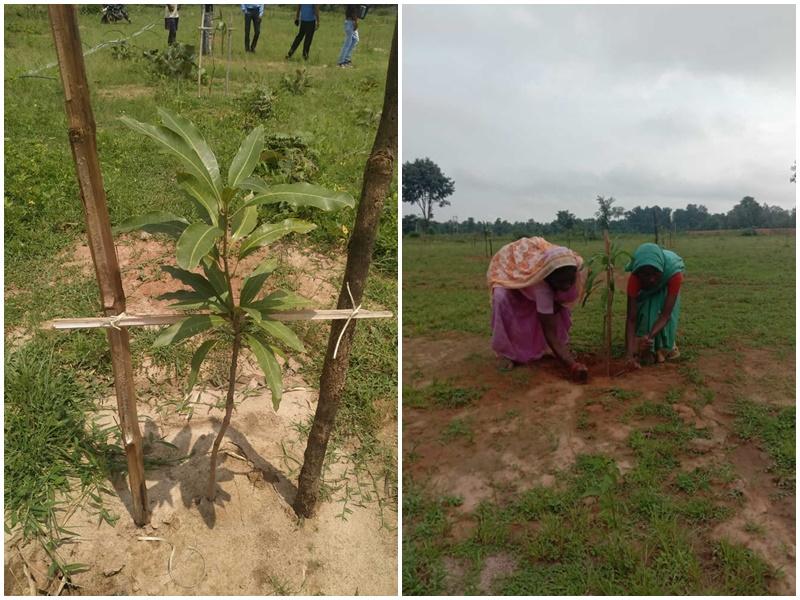 60 महिलाओं के जीवन में मिठास घोलेगी दशहरी और लंगड़ा आम की खेती
