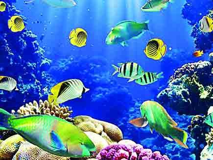 भोपाल में इस सप्ताह खुल जाएगा नया मछली घर