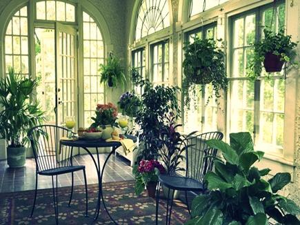 घर में इसलिए रखते हैं हरे पौधे