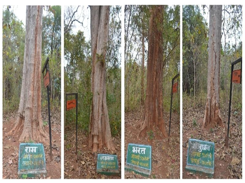 Story Of Bastar: बस्तर के माचकोट जंगल में पांच सौ साल से खड़े हैं राम, लक्ष्मण, भरत, शत्रुघ्न