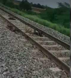 ट्रेन की चपेट में आकर 57 बकरियां सहित एक महिला की मौत, 3 घायल