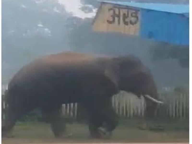VIDEO: रेलवे स्टेशन में घुसा हाथी, लोगों ने भागकर बचाई जान, एक घंटे तक वहीं घूमता रहा