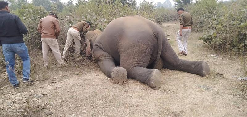 Jabalpur News: प्रदेश में हाथियों की सुरक्षा के समुचित इंतजाम क्यों नहीं, पीएस को भेजे गए लीगल नोटिस में उठाया सवाल