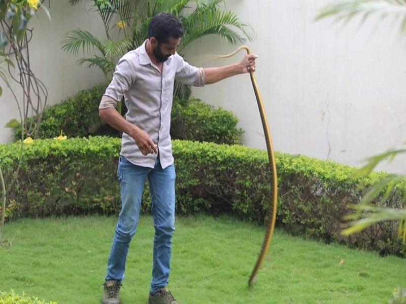 Snake Caught in CM House: रायपुर में सीएम हाउस समेत आबादी क्षेत्र में पकड़े गए दो माह में एक हजार से अधिक सांप