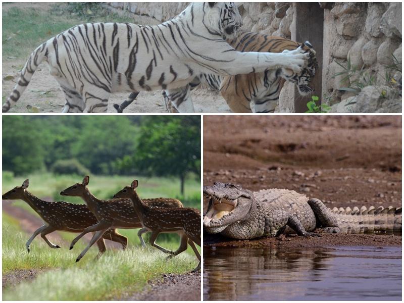 Gwalior Wild life Day  News: सघन जंगलों में कुलाचें भरता वन्य जीवन