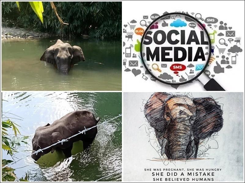 Elephant Death in Kerala : गर्भवती हथिनी से हुई बर्बरता पर भड़के Ratan Tata, Virat Kohli, दी यह प्रतिक्रिया