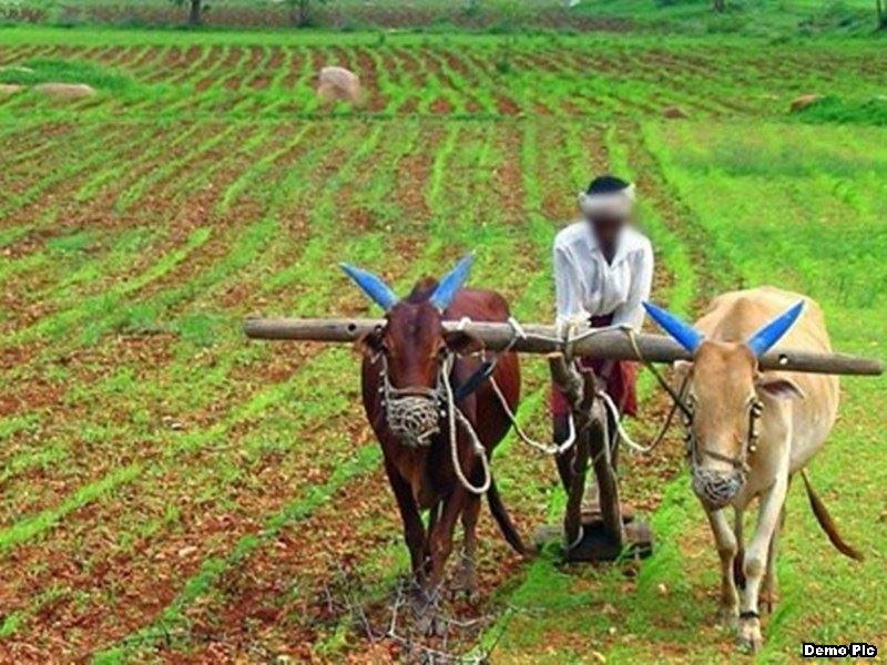 Agriculture Indore News: कृषि संबंधी नवीन जैव विविधता का पता लगाएंगे शहर के विशेषज्ञ