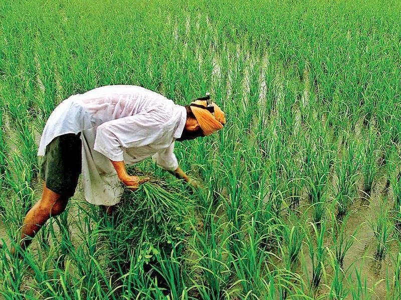 सरकार के पास किसान कर्ज माफी को लेकर कोई प्रस्ताव नहीं,  लोकसभा में मंत्री ने दिया जवाब