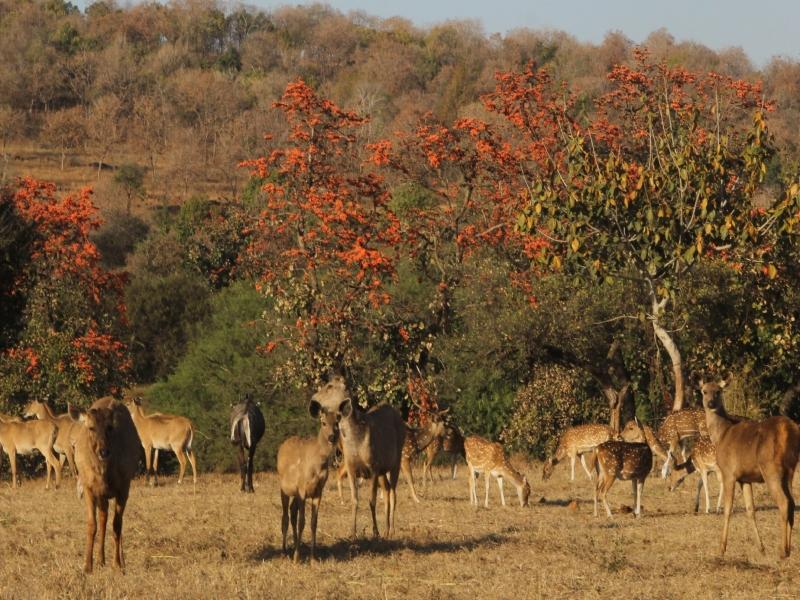 Van Vihar Bhopal: भोपाल के वन विहार में आज रात से शुरू होगी 'नाइट सफारी'