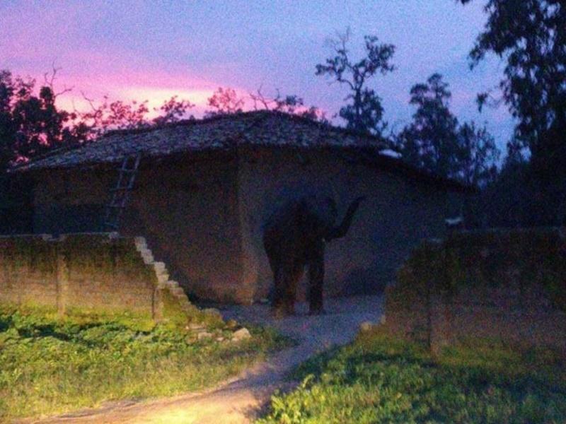 सूरजपुर जिले में खेत में रोपा लगाकर लौट रही महिला का हाथी ने कुचला