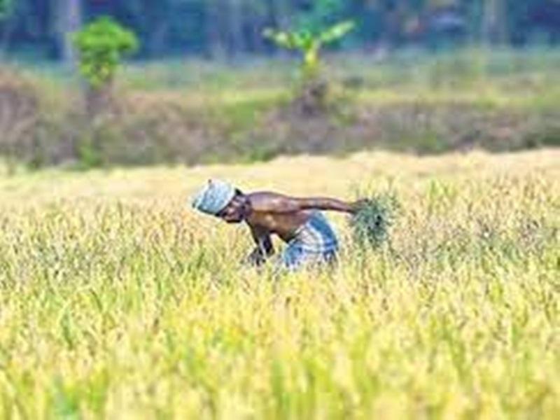 Madhya Pradesh News: केंद्र सरकार ने दी फसल बीमा के फार्मूले को मंजूरी, किसानों को मिलेगा फायदा