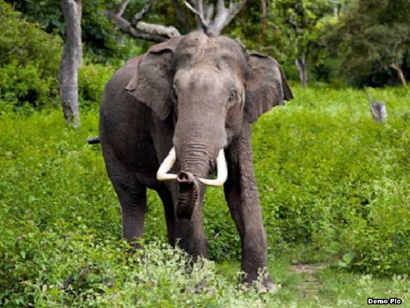उमरिया जिले में हाथियों के झुंड़ ने ले ली किसान की जान