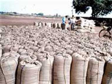 धान खरीदी शुरू होने के बाद मिल रही है रकबा कटौती की जानकारी, कई किसान परेशान