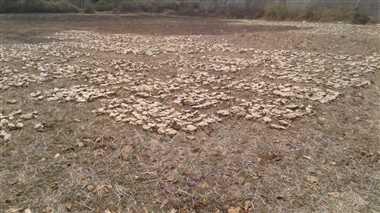 तेंदूपत्ता संग्रहण से पहले फड़ मुंशी देंगे कोरोना जांच  रिपोर्ट