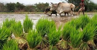 70 प्रतिशत किसानों को भेजे मैसेज गेहूं बेचने आए सिर्फ 30 प्रतिशत