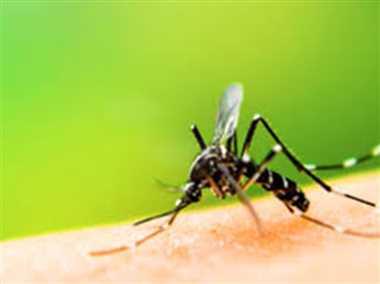 अलर्ट...सावधान हो जाइए, जिले में डेंगू की दस्तक, दो मरीज मिले