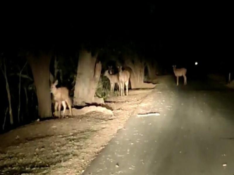 Bhopal Van Vihar News: वन विहार में रात्रिकालीन सफारी शुरू करने मप्र सरकार ने बदले नियम