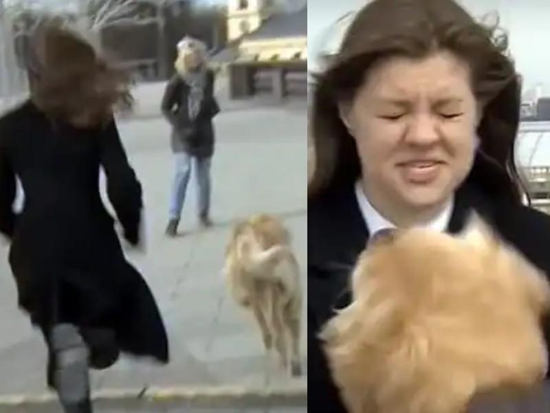 Viral Video: लाइव रिपोर्टिंग के दौरान कुत्ते ने महिला रिपोर्टर से छीना माइक, कैमरे पर रिकॉर्ड हुई मजेदार घटना