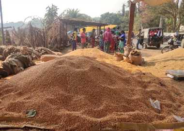 सरकारी खरीदी में विलंब से व्यापारियों के हवाले मक्का कर रहे किसान