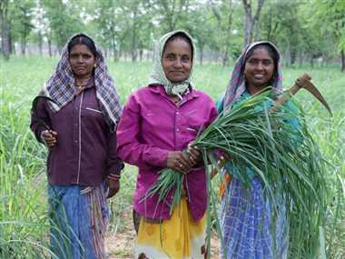 भटगांव में महिलाएं कर रहीं लेमन ग्रास की खेती