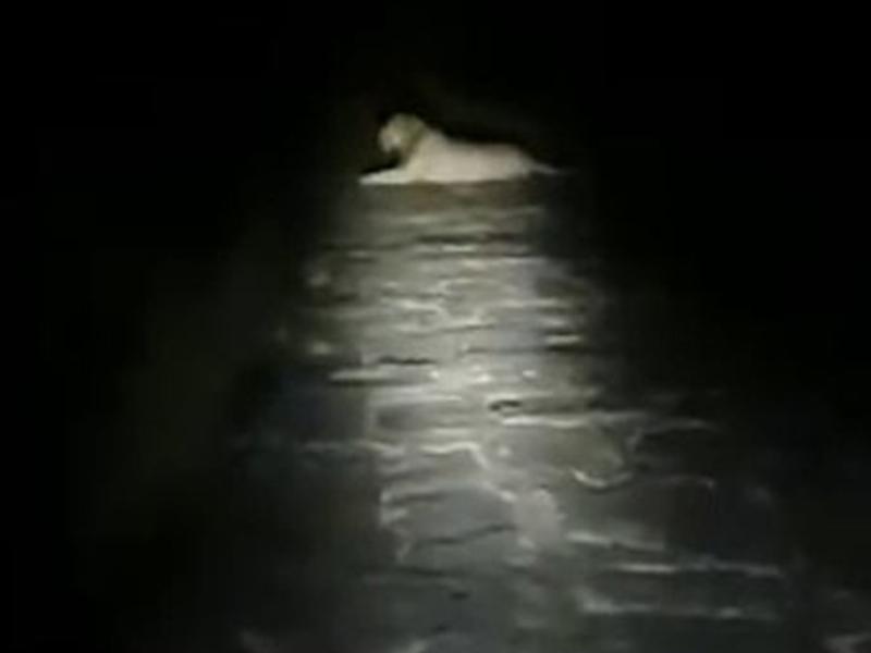 Gujarat Gir Lion Video: बाइक से घर लौट रहा था फोरेस्ट गार्ड, रास्ते में मिल गया शेर, देखिए फिर क्या हुआ