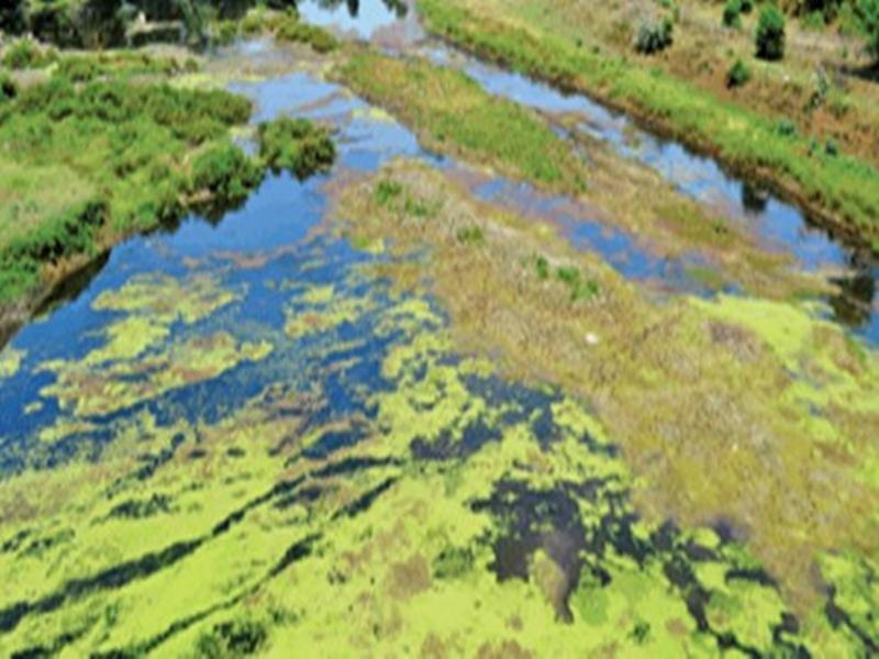 Jabalpur News : डेयरियों के गंदे पानी से परियट नदी में भी बढ़ा प्रदूषण