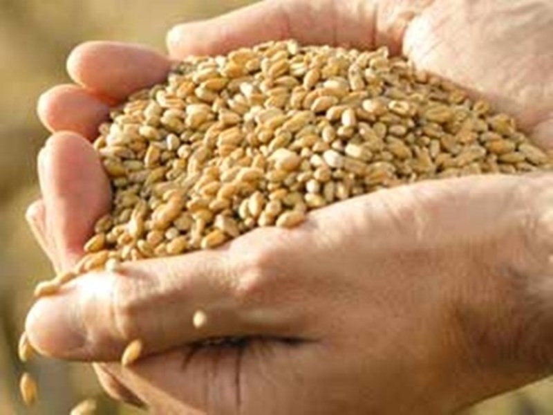 Jabalpur News : आठ दिन में सिर्फ 458 किसान पहुंचे खरीदी केंद्र