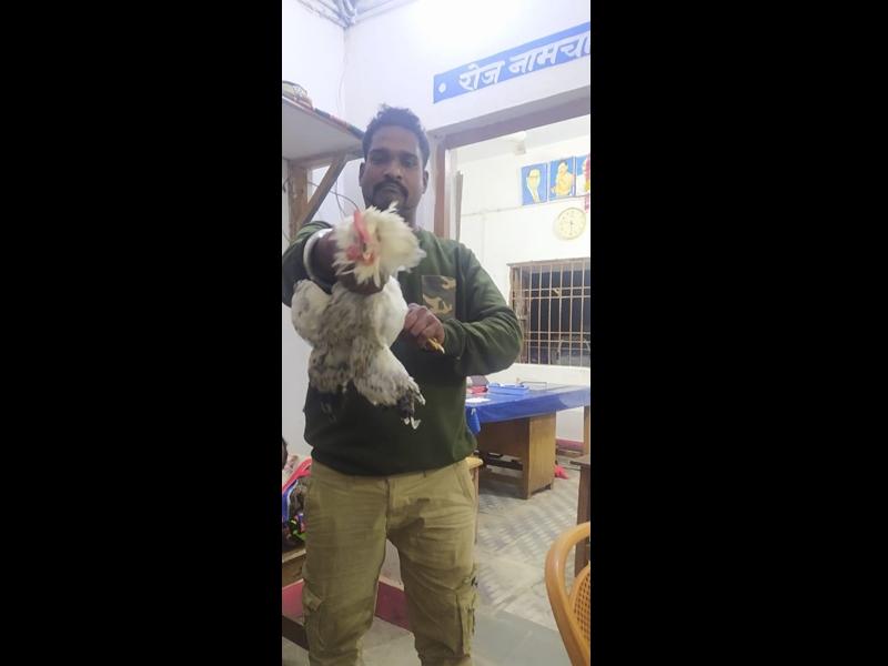 Janjgir Champa News: एक सिपाही थाना परिसर के अंदर नग्न घुमा तो दूसरे ने जिंदा मुर्गे के उखाड़ दिए पंख