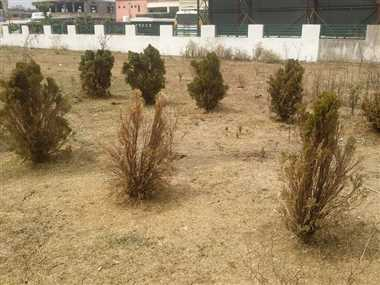 लाखों के खर्च के बाद भी देखरेख के अभाव में उजाड़ हो रहा उद्यान