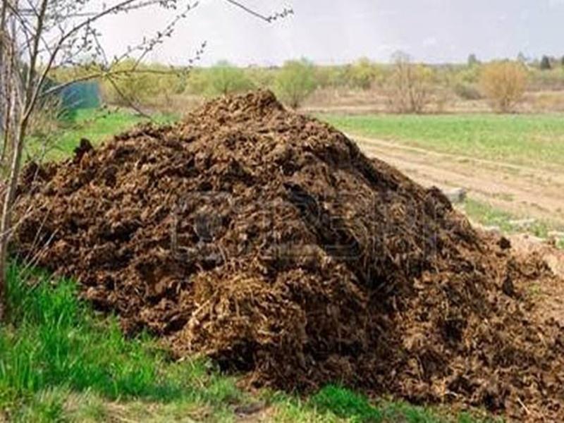 छत्तीगसढ़ में होने लगी गोबर की चोरी, किसान के बाड़े में रखा ढेर ले गए चोर