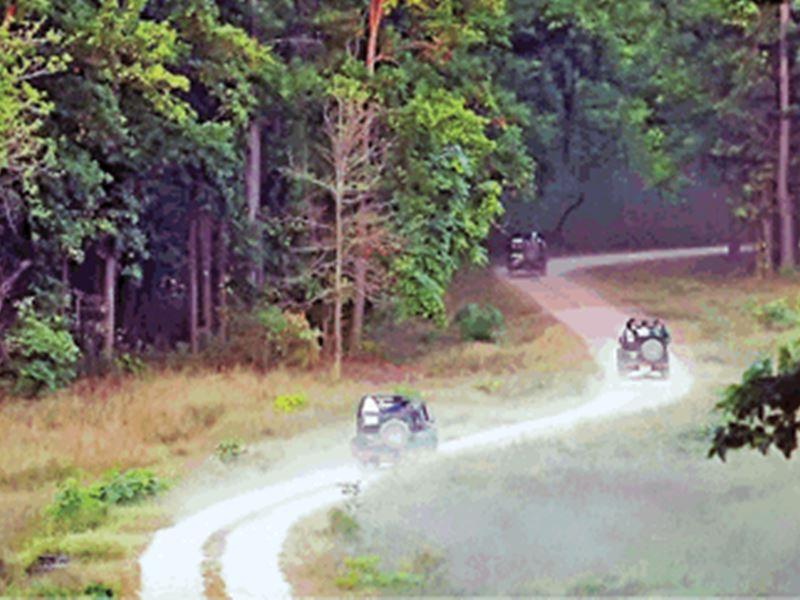 Night Safari in MP: कान्हा, बांधवगढ़ और पेंच में करें नाइट सफारी\