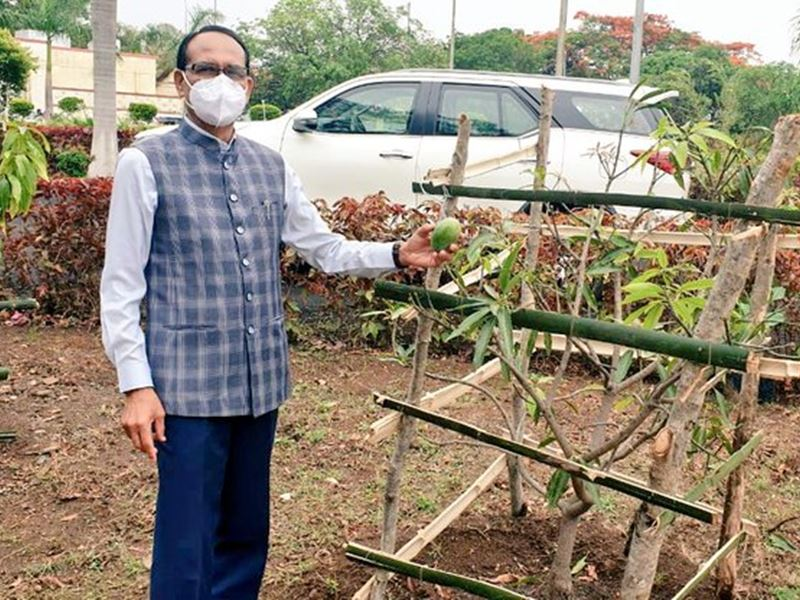 सीएम शिवराज सिंह चौहान को मिला 'मेहनत का फल', ट्वीटर पर किया फोटो शेयर, बरगद का पौधा भी रोपा