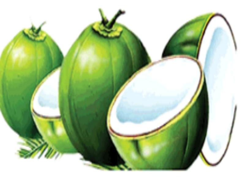 Gwalior corona Effect News: 80 रुपये तक में बिका नारियल, अब आधे दाम में मिल रहा