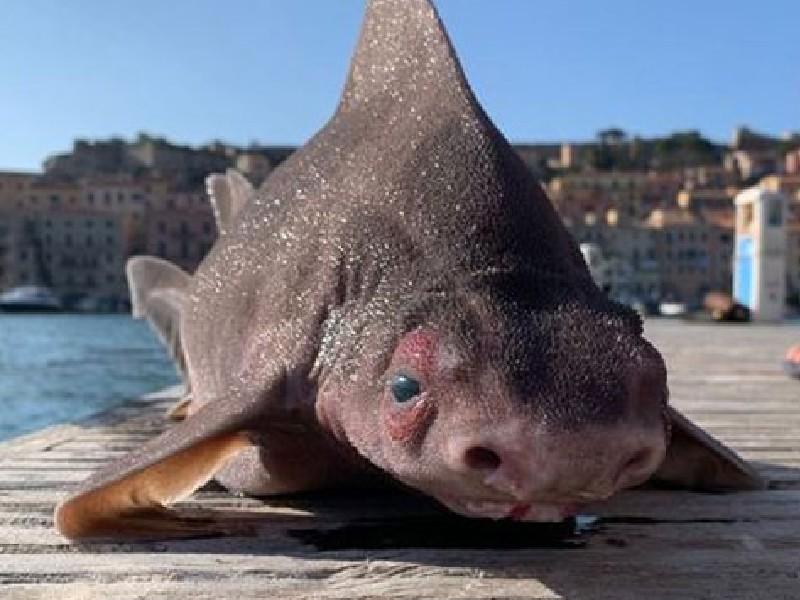 Viral News: इटली में मिली सुअर की तरह दिखने वाली मछली, जानिए क्यों बदल गया शरीर