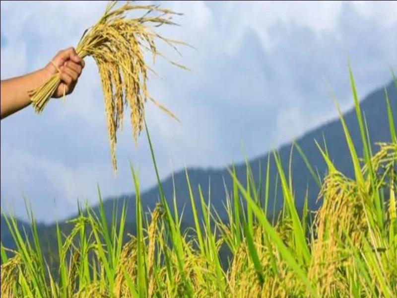 Political News In Bilaspur: आम आदमी पार्टी ने कहा-किसानों को एकमुश्त दी जाए राशि
