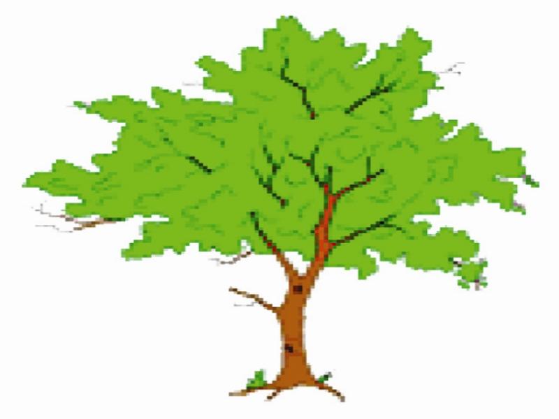 Gwalior News: बारिश के मौसम में पौधरोपण की तैयार करें योजना