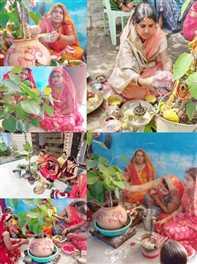 महिलाओं ने बरगद का पौधा लगाकर की वट सावित्री की पूजा