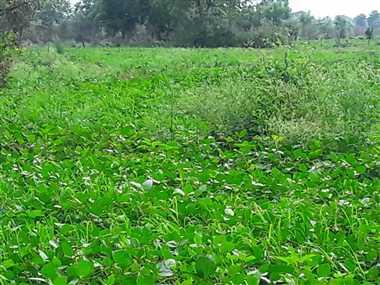 मौसम ने अचानक ली करवट, किसानों की बढ़ी चिंता