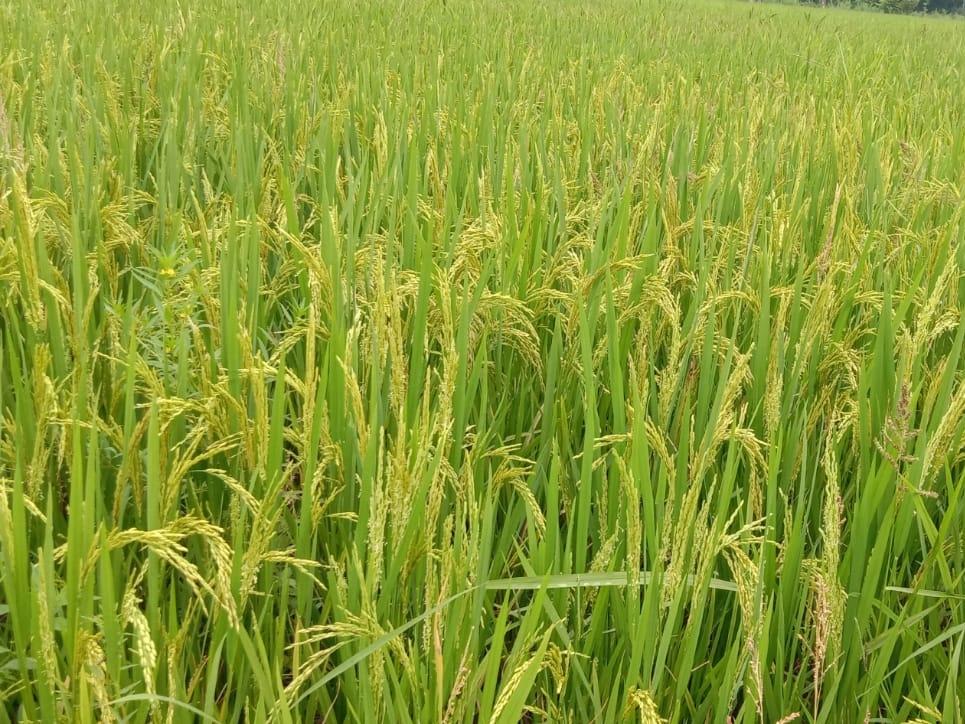 Politics On Farmers: महंगाई के अनुपात में केंद्र सरकार ने नहीं बढ़ाया समर्थन मूल्य