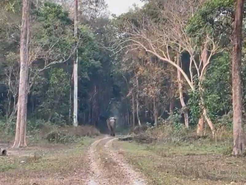 Viral Video: जंगल में मदमस्त हाथी की स्टाइिश वॉक, ऐसी चाल के लोग भी दीवाने
