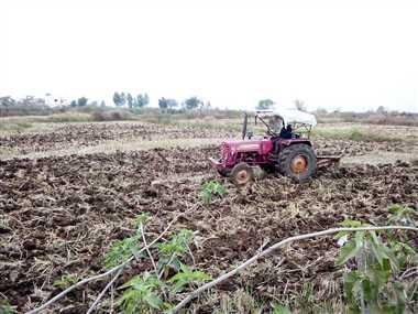 बारिश से खेती-किसानी के कार्यों में आई तेजी
