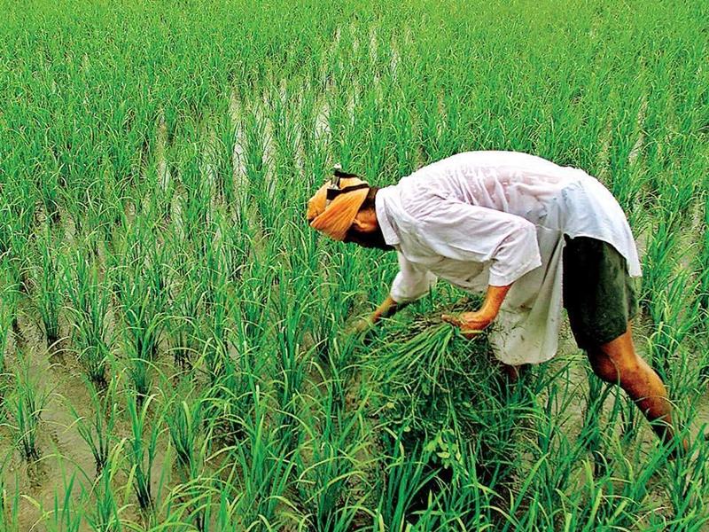 Mukhya Mantri Kisan Sahay Yojana: 56 लाख किसानों को बिना प्रीमियम दिए मिलेगा 1 लाख रुपए तक का मुआवजा