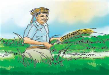 गुजरात से लाया हुआ नकली कपास का बीज न लगाए, सचेत रहे किसान