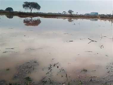 बेमौसम बरसात ने किसानों की मेहनत पर फिरा पानी