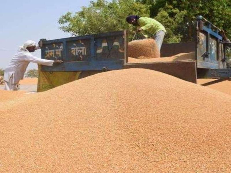 Wheat Procurement in Madhya Pradesh: मध्य प्रदेश में फिर टूट सकता है गेहूं खरीद का रिकॉर्ड , सात दिन में इतनी खरीदी