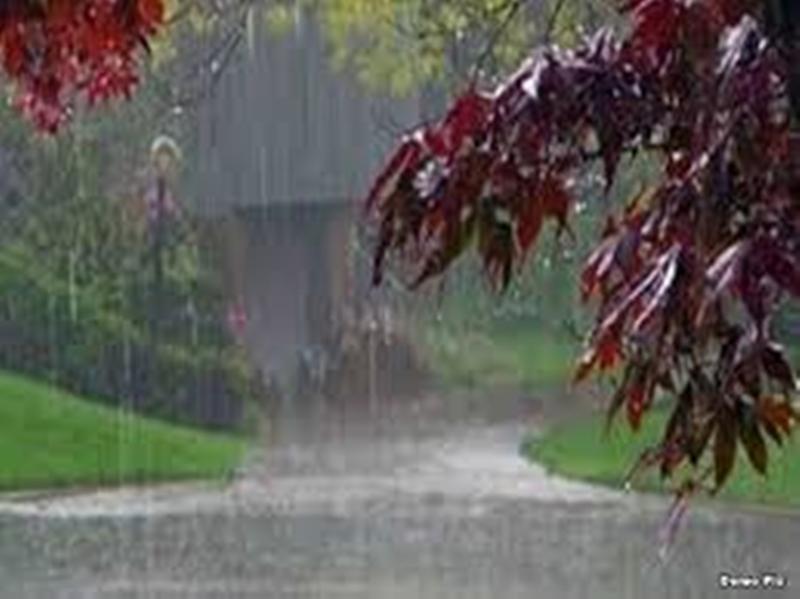 Rain in Madhya Pradesh : झाबुआ, बुरहानपुर और रतलाम में बारिश, पेड़ गिरे