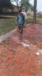 झाबुआ : कड़कनाथ पालकों के सामने आया रोजी-रोटी का संकट
