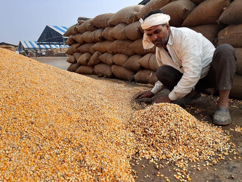 Madhya Pradesh Weather Update : भोपाल और ग्वालियर क्षेत्र में गिरे ओले, खुले में रखी फसल भीगी, सब्जियों को नुकसान