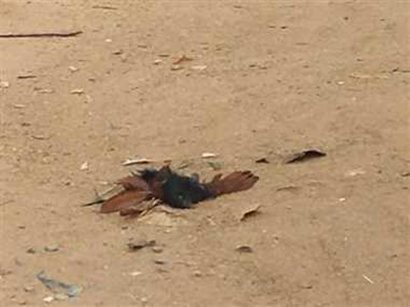 भिलाई जिले में भी मिले मृत पक्षी, बर्ड फ्लू से आशंका में लोगों ने डायल 112 पर किया फोन