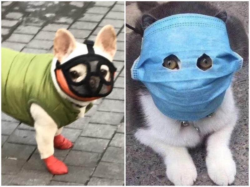 Coronavirus का कहर, चीन में पालतू जानवरों को भी पहनाया जा रहा है मास्क